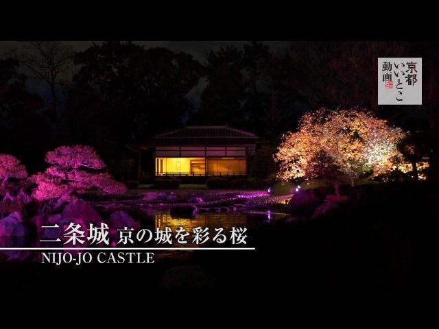 二条城 京の城を彩る桜 / Nijo-jo Castle / 京都いいとこ動画
