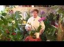 Как выбрать орхидею к 8 Марта - Цветочная лавка