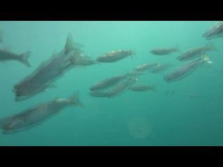 Море под водой в Абхазии (Пицунда) | Подводный морской мир Черного моря