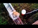 Умный кот Маркиз, домой