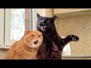 Cats, funniest creatures in animal kingdom - Funny cat compilation