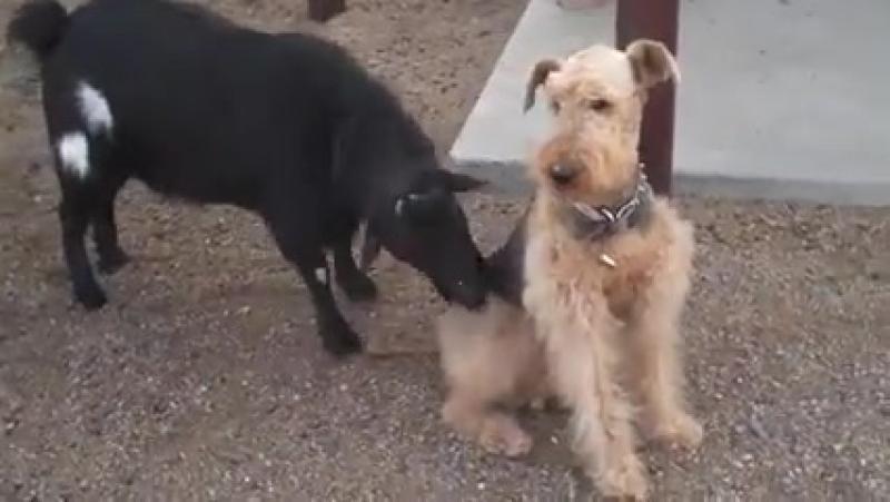 Собака познавшая дзен