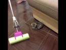 Как мыть полы, если у вас кот
