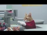 Кошки в рекламном ролике/ Сеть супермаркетов сняла рекламу, в которой все роли исполнили котики. Это просто что-то.