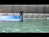 Дельфинарий на Крестовском СПБ. Морская львица Варя крутит обруч.