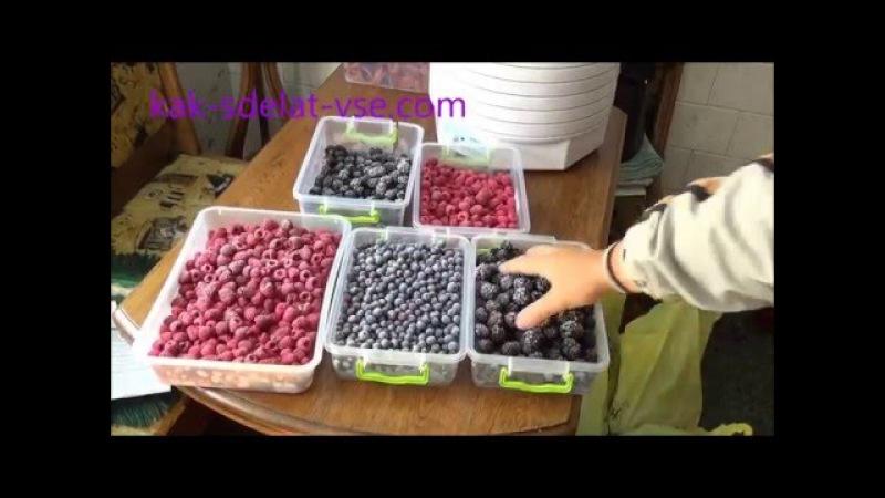 Заморозка ягод – малина, смородина, голубика, ежевика.