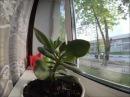 Тайная жизнь домашних растений (The Secret Life of Plants)