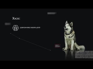 Сибирские Хаски – все о породе собаки – Purina Pro Plan Ukraine