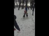 Благотворительная фотосессия со сказочными собаками ХАСКИ в Центральном парке культуры и отдыха 6 февраля 2016г.все вырученные с
