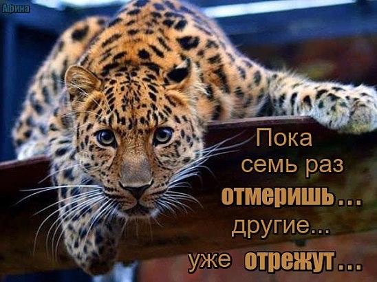 https://pp.vk.me/c630829/v630829335/3f376/zzUmaXnhI2Y.jpg
