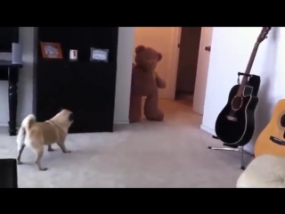 Собака испугалась и обкакалась!)))