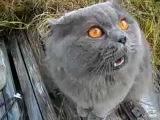 Обиженный кот Кузя ругается с хозяином и даже обзывает его гадом!
