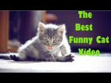 The Best Funny Cat & Cute Kittens | Fail Animals Video № 30 | Morsomme Katter № 30