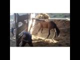 жестоко, конь сломал ногу человеку