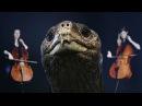 Lonesome George (A Musical Memorial) | SKUNK BEAR