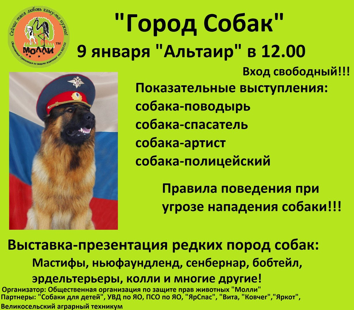 Город собак