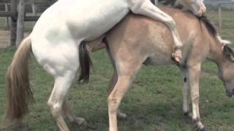 бесплатное картинки гугл мультфильмы секс коз лошадь и коровой № 115819