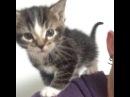 Meow mix for you! meowmix meow cute kitten xmen xmenkittens squee dorbs trynottosqueak