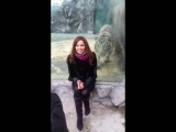 Tiger at zoo tries to paw a Woman through Glass