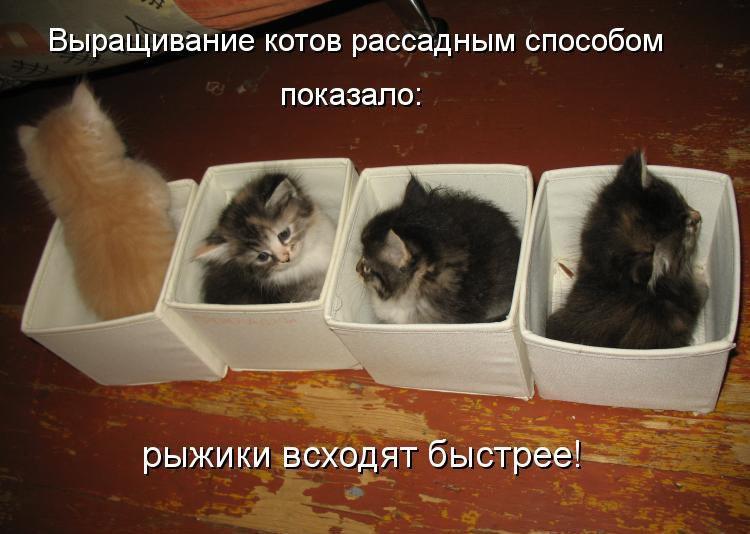 коты и цветы YtX4yuRl35g