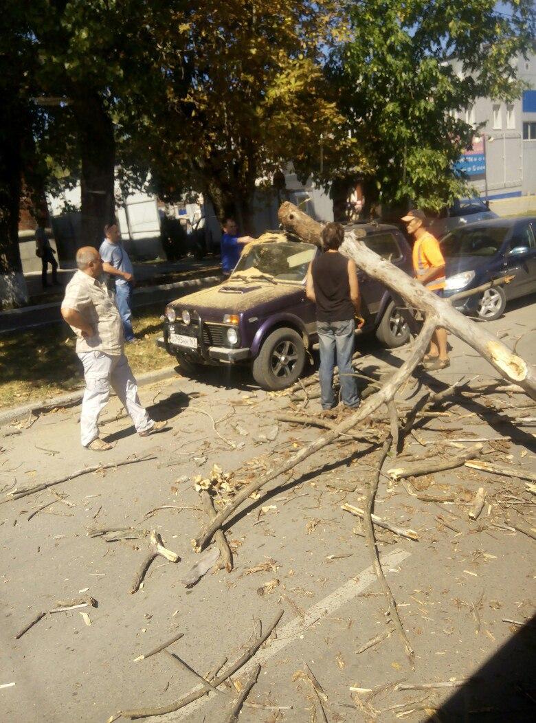 В Таганроге в районе «Ленты» сухая ветка упала на припаркованную «Ниву»