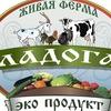 Фермерские натуральные продукты Санкт-Петербург