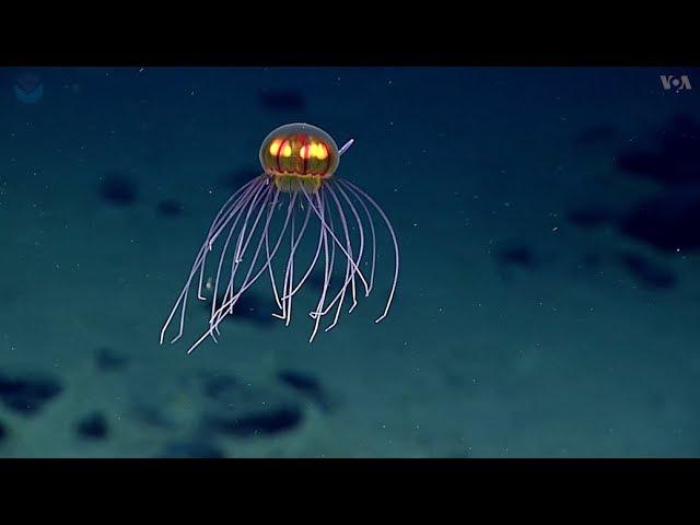 Невероятный подводный мир Марианской впадины.