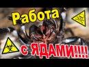 Работа с ядовитыми пауками меры предосторожности и способы пересадок