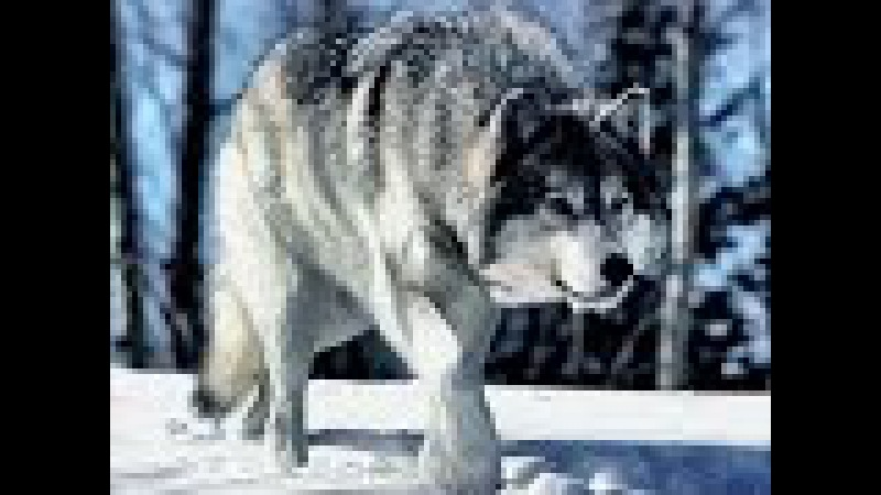 Дикая природа Аляски (Документальные фильмы National Geographic HD)