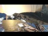 J Class Shamrock Sailing in Montenegro