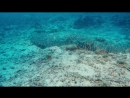 На глубине морской (Under the Sea, 2009)