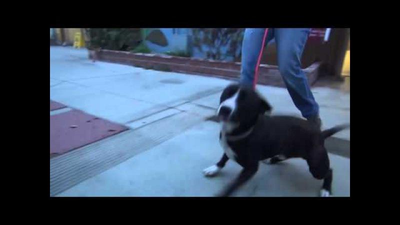 Пёс из приюта не смог сдержать эмоций, когда понял, что его пришли забрать, а не усыпить.