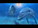 Chris Michell «Dolphin Love» МЫ ЕСМЬ ОДНО В ЛЮБВИ!