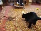 CAT vs. JACKIE CHAN