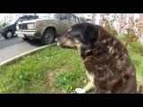 Серая Среда и The Солпатэин - Собак Батяня (2016)