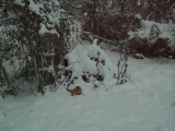 Кот Виталик и первый снег .