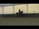 Конный спорт. Выездка. Обучение.Серый. 3, 5 года. Пассаж. Проверка, чтобы не забывал.. 25.12.2015