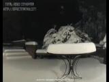 А снег кружится летает....