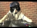 DJ Kitteh feat. Schatrax - Loops And Samples