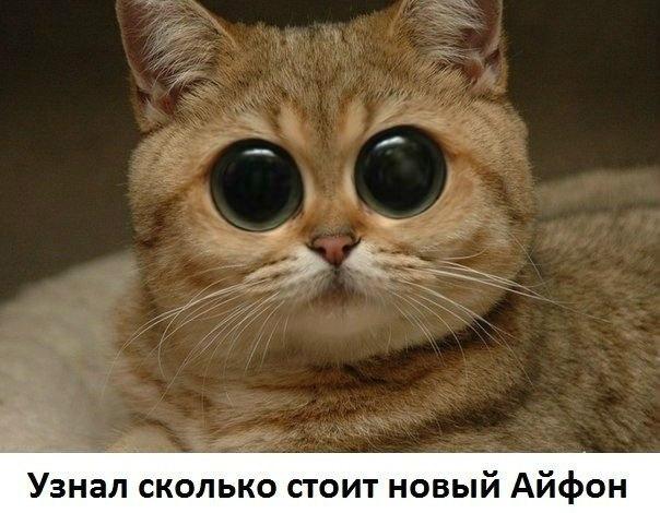 http://cs630918.vk.me/v630918485/26cdd/O78IS3BxJNc.jpg