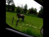 Рок-лошадь