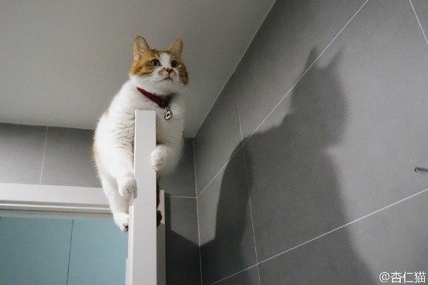 Кот снаружи, супергерой - внутри