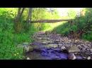 🎧 Ручей в лесу. Звуки леса, пение птиц для релаксации
