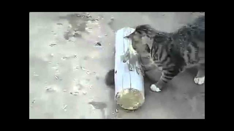 Кошка придушила мышь и играется с мышью Прикол!Юмор! Смех Смешные приколы с кош...