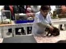 Конкурс Пермский кролик 2014 Семинар по кролиководству Кролик породы Рекс