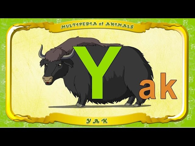 Multipedia of Animals. Letter Y - Yak