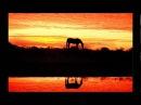 Konie w oprawie czerwonych gitar Wschód słońca w stadninie koni