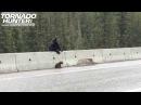 Мама медведица спасает непослушного медвежонка