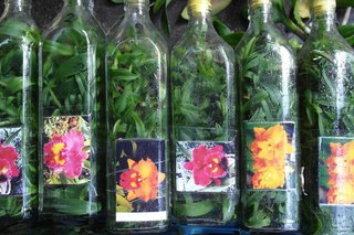 Купить фласки орхидей