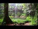 Sonido de Lluvia y los Animales del Bosque - HD Lluvia - Relajarse, Dormir